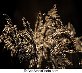 Beautiful landscape image of Winter reeds in golden early...