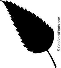Balsam poplar leaf