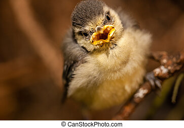 Baby tit on a tree branch - Baby tit sitting among the tree...