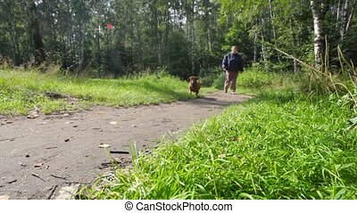 aged woman with dachshund in park - aged woman walks with...