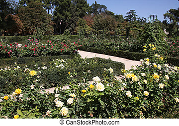 Madrid botanical gardens - Beautiful rosarium in Madrid Buen...