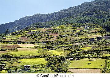 Bhutan, Haa, 1537 - Bhutan, rural area in Haa valley