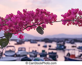 closeup pink blossom in front of bay and boat