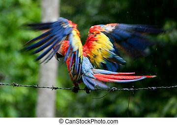 Parrot  - Colorful parrot in jungle