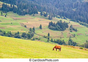 Grazing horse on a summer mountain pasture. Ecological environment