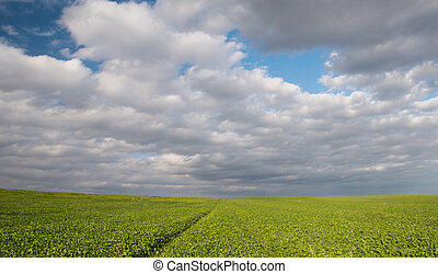 Green field and cloudy sky with white cumulos clouds late in...
