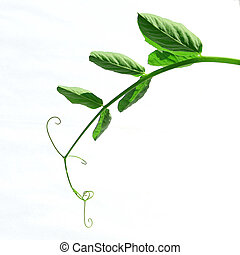 stalk of the plant on white background