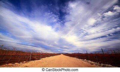 Field of vineyards - Time lapse video storm clouds field of...