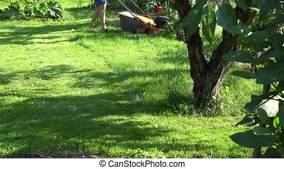 Landscaper man mowing grass between flowers and fruit trees...