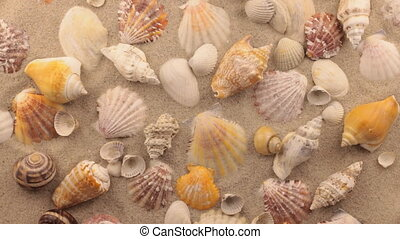 Rotation of seashells and stones. View from above