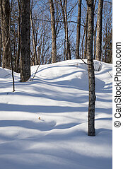 Deciduous trees casting blue shadows in the snow. -...