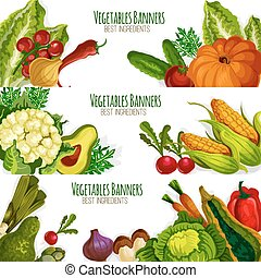 Vegetable vector banners set of fresh vegetables -...