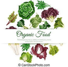 Green leafy salad vegetables vector poster - Leafy salads...