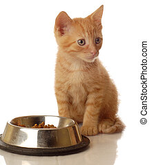 orange tabby kitten sitting beside the food bowl - seven...