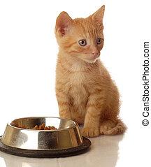 orange tabby kitten sitting beside the food bowl - seven...