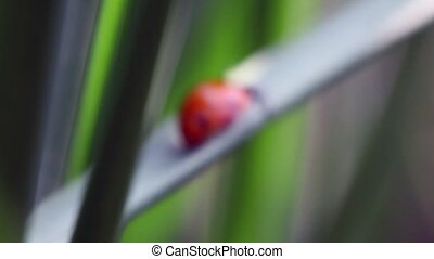 ladybug creeping on stalks of plants - ladybug creeping on...