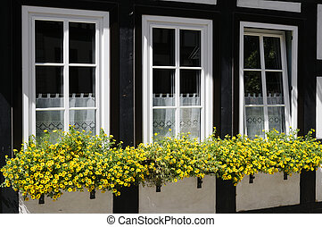 Windows with flower boxes - Three windows decorated with...