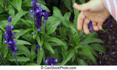 children hands fingering both shaking stalk and flower -...
