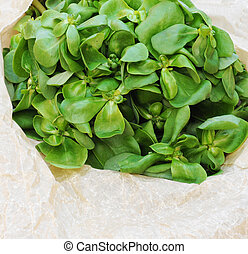 Organic purslane on neutral background with copy space