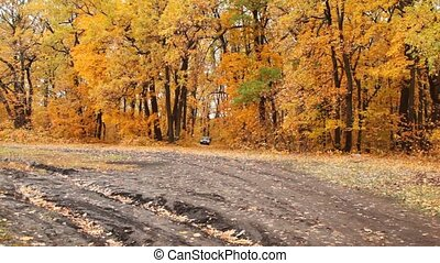 car goes back on wood road covered with fallen down leaves...