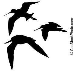 Godwits Birds Silhouettes. Vector EPS 10.