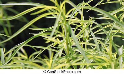 set of green stalks of plant in botanical garden - review of...