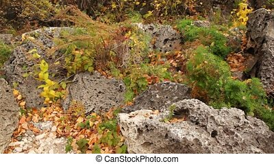 plants growing among porous stones