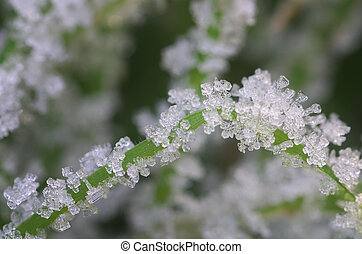 Rime and snowflake on grass. Macro nature composition.