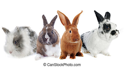 group of rabbit - group pf rabbit in front of white...