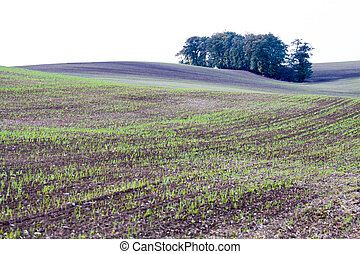 Moravian wavy fields with islands of tree in Czechia.