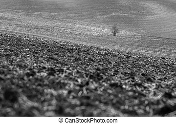 Crude and monochromatic fields with lonely tree in South...