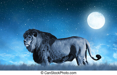 Lion on the savannah in the background night sky with moon.