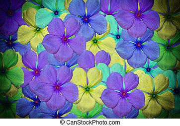 Vinca flower - beautiful Vinca flower background in vitage...