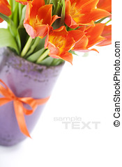 tulips - Orange tulips on white background with easy...