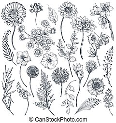 Collection of hand drawn flowers and plants. Monochrome...