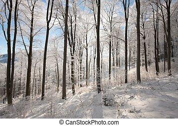 bosque, soleado, invierno, mañana