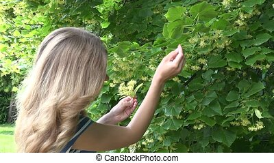 girl pick yellow linden hand at summer. Seasonal herb...