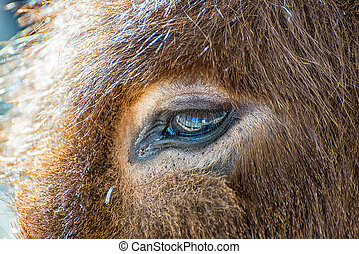 驢, 眼睛