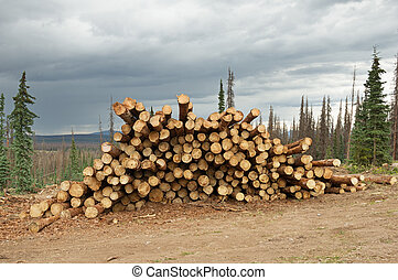 Salvage Timber - logs stacked from a bark beetle killed...