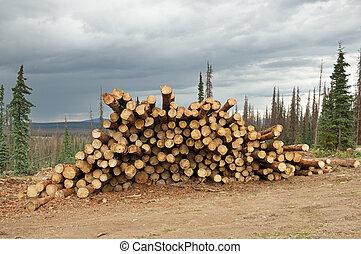 Salvage Timber