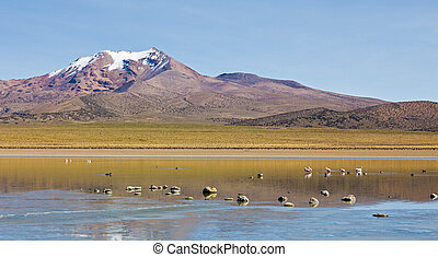 Flamingos in the lagoon Huayñacota in the Natural Park of Sajama. Bolivia