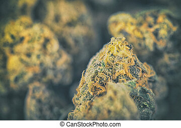Detail of dried cannabis buds - medical marijuana concept -...