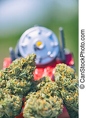 Dried cannabis buds (Train Wreck strain) with plastic toy - medical marijuana concept