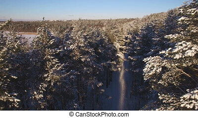 Beautiful aerial view of snow-covered forests. The tops of...
