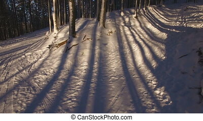 beautiful shadows from the trees on the snow - shadows from...