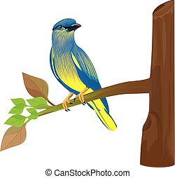 bird on branch vector design