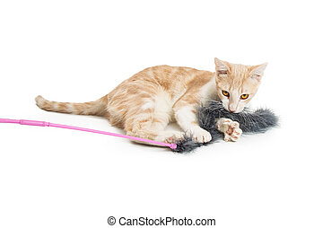 Young Cat Playing With Feather Toy - Young orange and white...