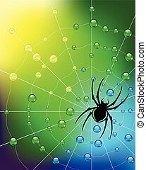 Spider on the web in dew drops. Vector.