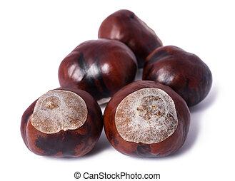 horse chestnut (Aesculus hippocastanum) - horse-chestnut...