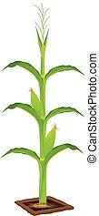 corn plant vector design